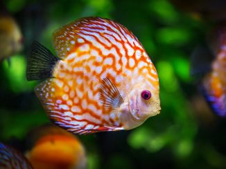Où visiter un aquarium en Midi Pyrénées ?