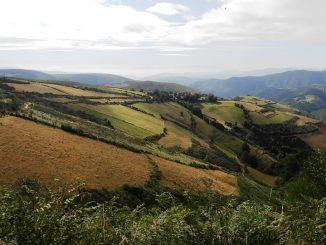 Quels sont les produits AOP des Midi Pyrénées ?